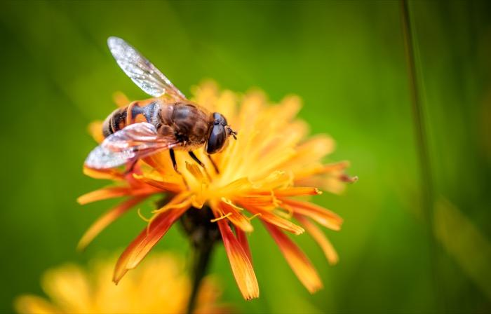 ¿Sabes en qué consiste la apicultura ecológica?